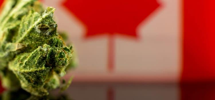 Cannabis: Legislation passed For Legalization - But What Happens Next?