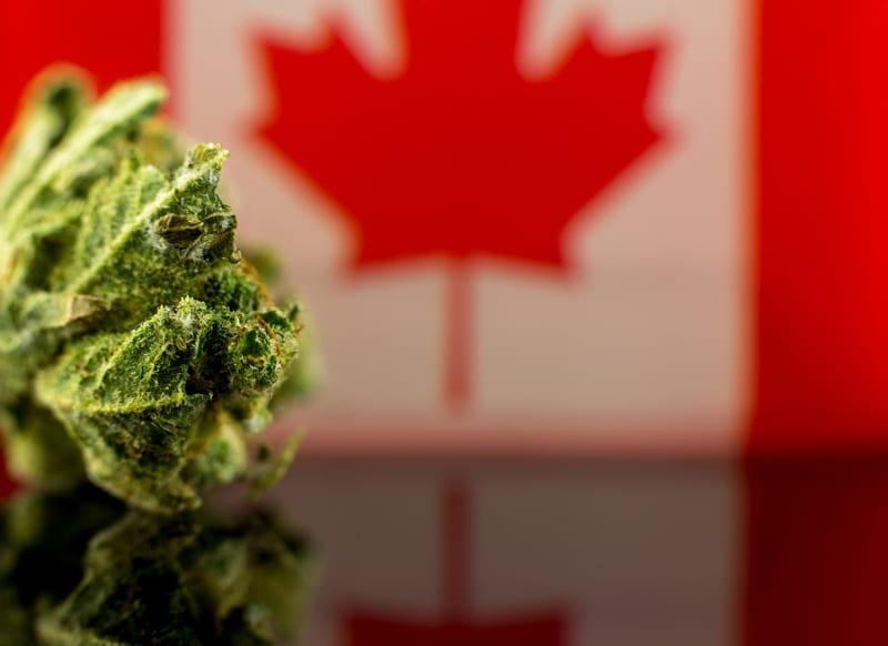 Cannabis: Legislation passed For Legalization - But What Happens Next?