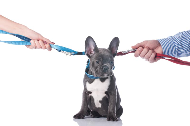 How Can I Obtain Custody of the Family Pet in My Divorce?