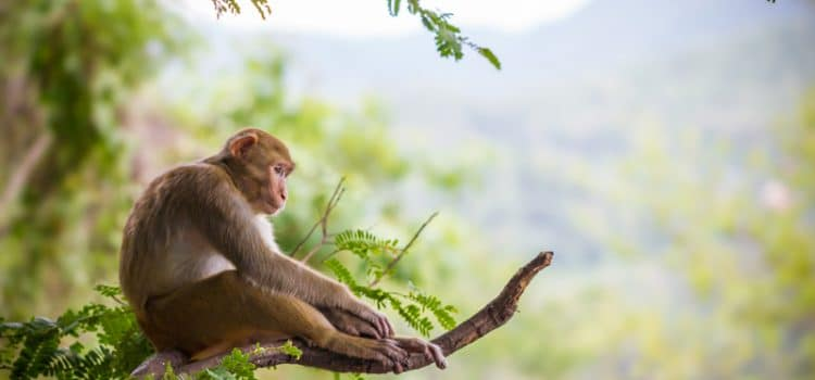 Monkey Sues Human Over 'Selfies' Taken In 2011