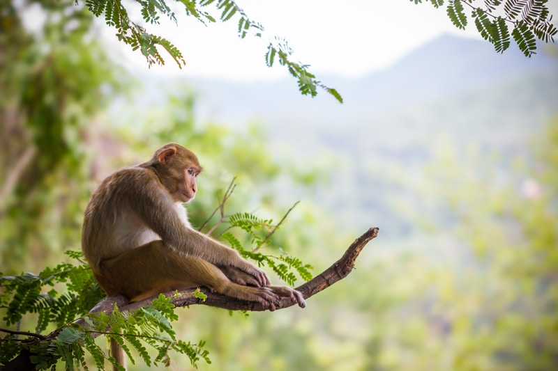 Monkey Sues Human Over 'Selfies' Taken In 2011