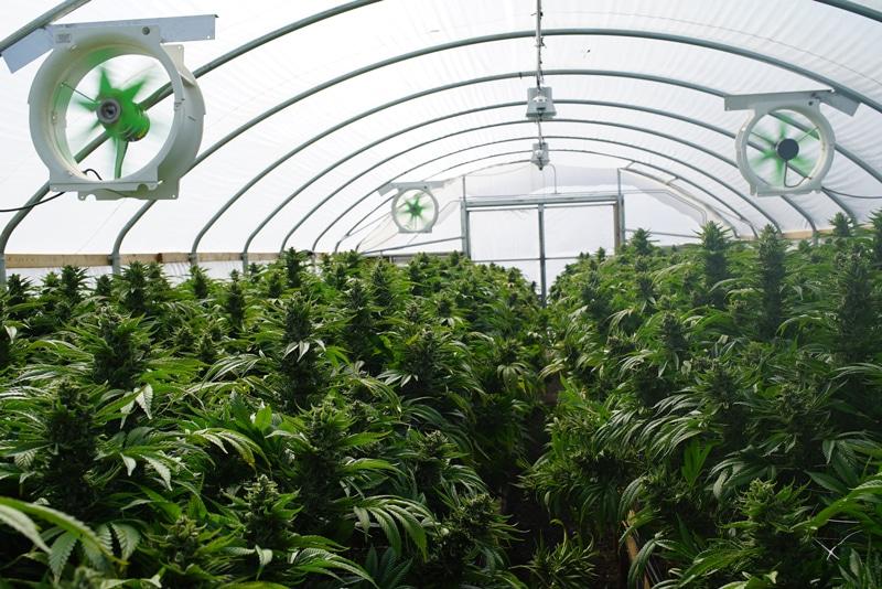 Ontario's First Post-Secondary Marijuana Production Certificate