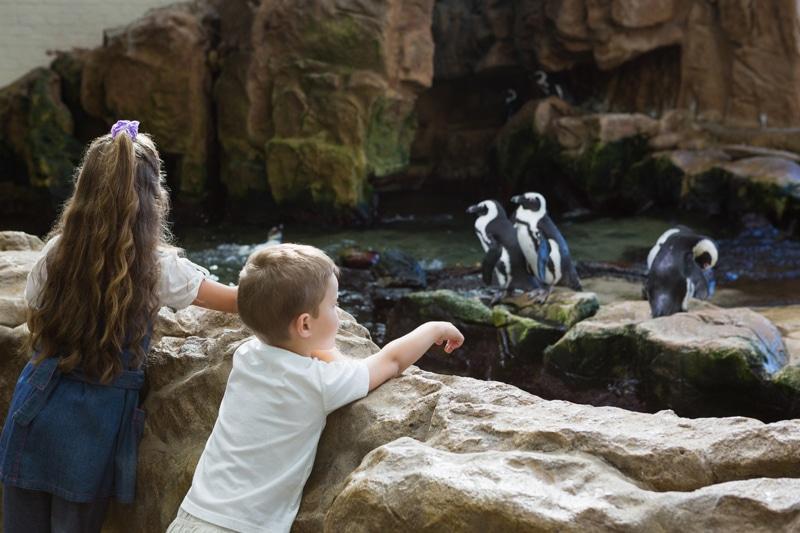 Toronto Zoo Strike Costs Toronto $4 Million